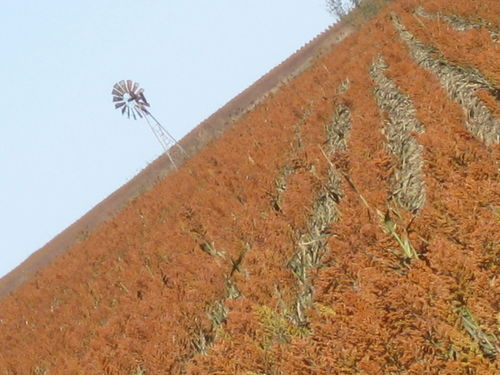 Wheat and pumpkin patch 152